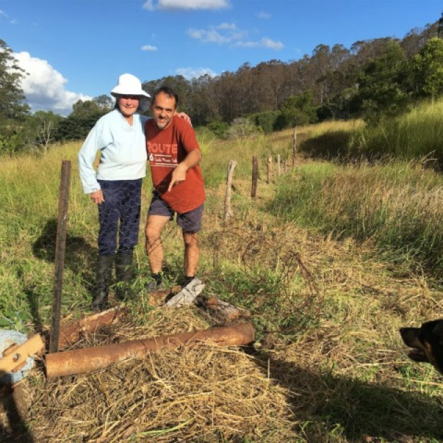 Leopard tree planted near sping