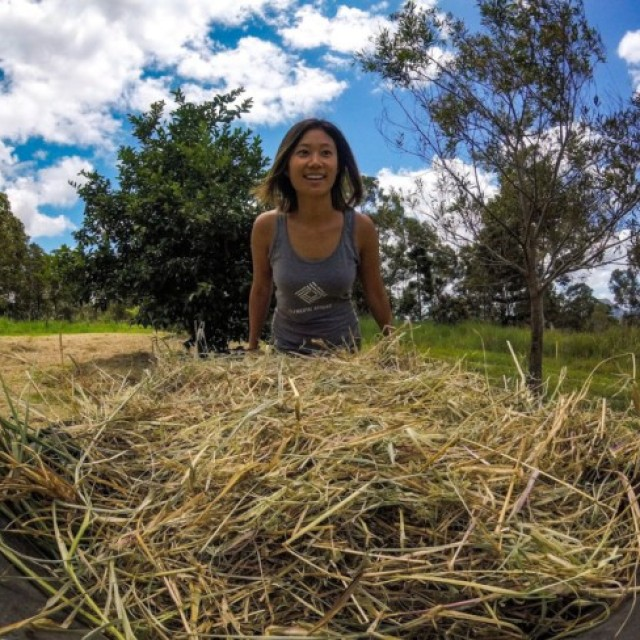 Mulching underway wheelbarrow with straw and a smile